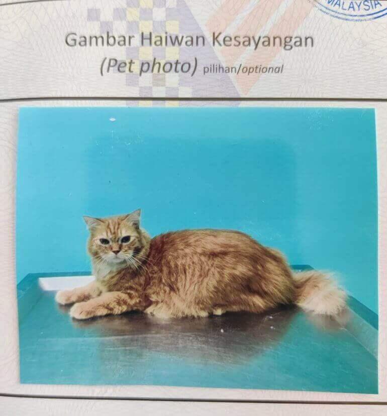 kad pengenalan gambar kucing