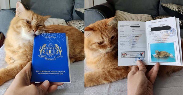 kad pengenalan haiwan kucing