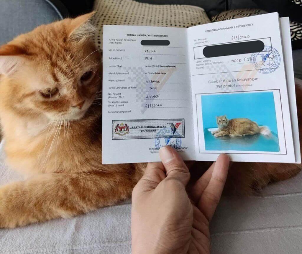 kad pengenalan kucing