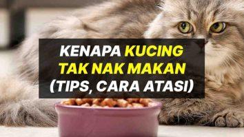 kenapa kucing tak nak makan