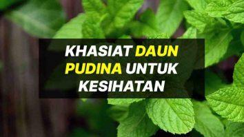 khasiat daun pudina